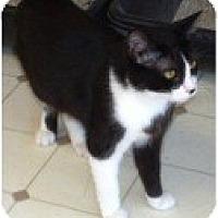 Adopt A Pet :: Aurora - El Cajon, CA