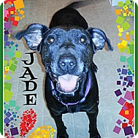 Adopt A Pet :: Jade - Elderton, PA
