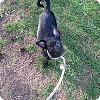 Adopt A Pet :: Sabrina - Chicago, IL