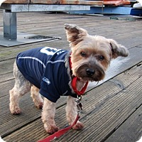 Adopt A Pet :: Kirby - Gig Harbor, WA