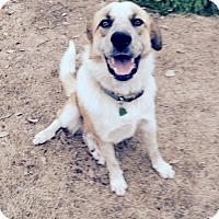 Adopt A Pet :: Sammy - McKinney, TX