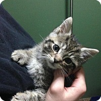 Adopt A Pet :: Howser - Caistor Centre, ON