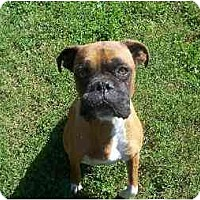 Adopt A Pet :: Forrest - Brentwood, TN