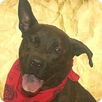 Adopt A Pet :: Jacky - Cincinnati, OH