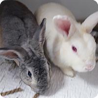 Adopt A Pet :: Mick and Donald - Williston, FL