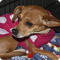 Adopt A Pet :: Krista - Meridian, ID