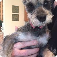 Adopt A Pet :: Cookie - Carteret/Eatontown, NJ