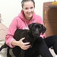 Adopt A Pet :: Brigit - Elyria, OH