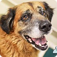 Adopt A Pet :: Leslie ( URI/ Foster Hero Needed) - Gulfport, MS