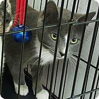 Adopt A Pet :: Twilight - Livingston, TX