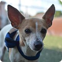 Adopt A Pet :: Jeremiah - Austin, TX