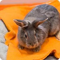 Adopt A Pet :: *IRIS - Sacramento, CA