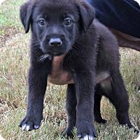 Adopt A Pet :: Rumba - Durham, NC