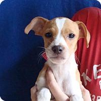 Adopt A Pet :: Kammy - Oviedo, FL
