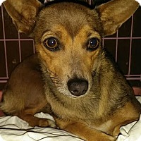 Adopt A Pet :: Canella - Orange, CA
