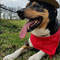 Adopt A Pet :: Daylee - N - Huntington, NY