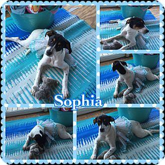 Hound (Unknown Type) Mix Puppy for adoption in Lexington, Kentucky - Sophia
