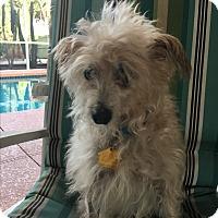 Adopt A Pet :: Cody - Lehigh, FL