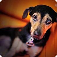 Adopt A Pet :: Spud - Salt Lake City, UT