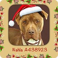 Adopt A Pet :: URGENT! Nahla in Moreno Valley - San Bernardino, CA