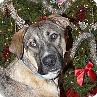 Adopt A Pet :: Cash - Middletown, OH