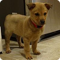 Adopt A Pet :: Happi - New Oxford, PA