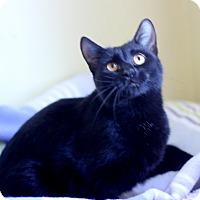 Adopt A Pet :: Rusty - Dalton, GA