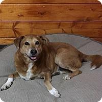 Adopt A Pet :: Eddie - Temecula, CA