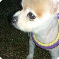 Adopt A Pet :: Charlie - Malabar, FL
