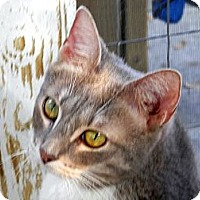 Adopt A Pet :: Valentina - Miami Beach, FL