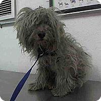 Adopt A Pet :: Vanni URGENT - San Diego, CA