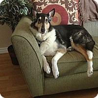 Adopt A Pet :: Auggie - Riverside, CA