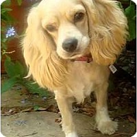 Adopt A Pet :: Bridget - Sugarland, TX