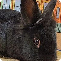 Adopt A Pet :: Frankie - Foster, RI