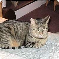 Adopt A Pet :: Rosie - Warren, OH