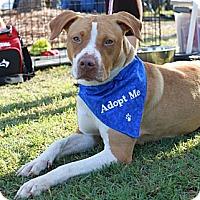 Adopt A Pet :: Jayda - Snellville, GA