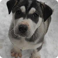 Adopt A Pet :: Gretta - dewey, AZ