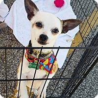 Adopt A Pet :: Bubbles - Elkhart, IN