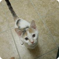 Adopt A Pet :: Gwyn - Medina, OH