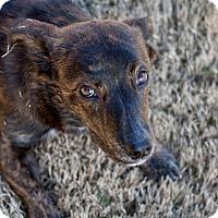 Adopt A Pet :: Crumpet - Homewood, AL
