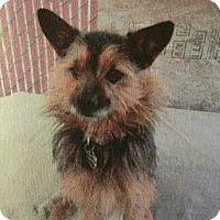 Adopt A Pet :: RANGER - Gustine, CA