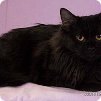 Adopt A Pet :: Zaza - Las Vegas, NV