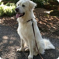Adopt A Pet :: Toby - Penngrove, CA