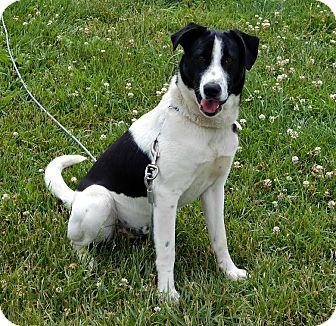 Border Terrier Mix Dog for adoption in Owenboro, Kentucky - LOKI