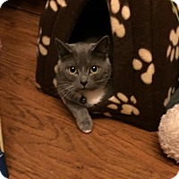 Adopt A Pet :: Aphrodite - Chesapeake, VA
