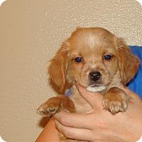 Adopt A Pet :: Wags - Oviedo, FL