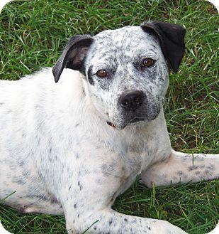 Cattle Dog Mix Dog for adoption in Owatonna, Minnesota - Sadie
