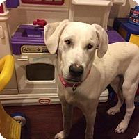Adopt A Pet :: Kassidy - Amherst, NY