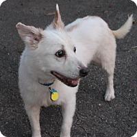 Adopt A Pet :: Josie - West Des Moines, IA