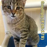 Adopt A Pet :: Grumpy - Tiffin, OH